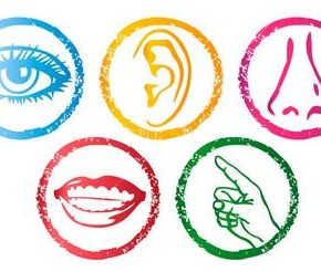 Introduction to Multi Sensory Taste Perception