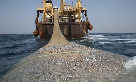 It has been estimated by the United Nations Food and Agriculture Organisation that over 70% of the world's fish stocks are either fully exploited or depleted