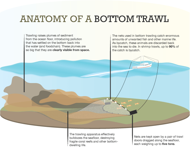 bottom_trawling